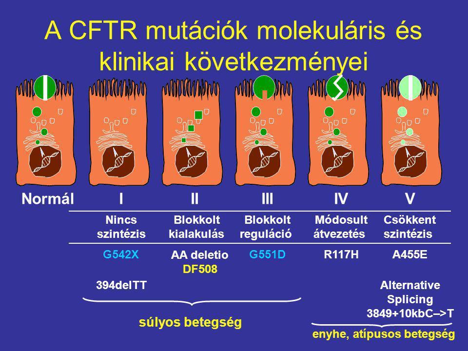 A CFTR mutációk molekuláris és klinikai következményei