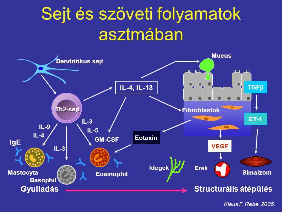 Sejt és szöveti folyamatok asztmában