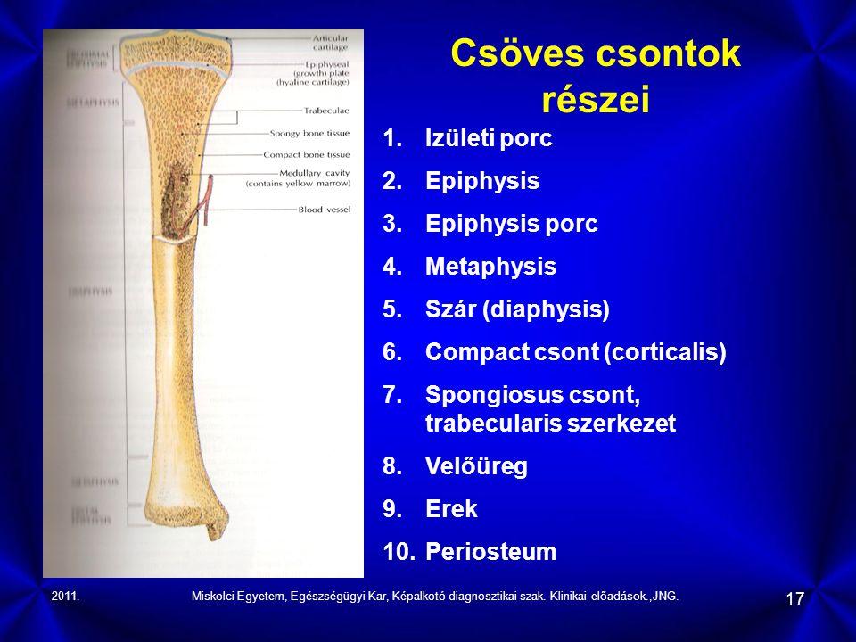 Csöves csontok részei Izületi porc Epiphysis Epiphysis porc Metaphysis