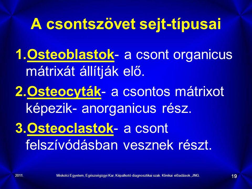A csontszövet sejt-típusai