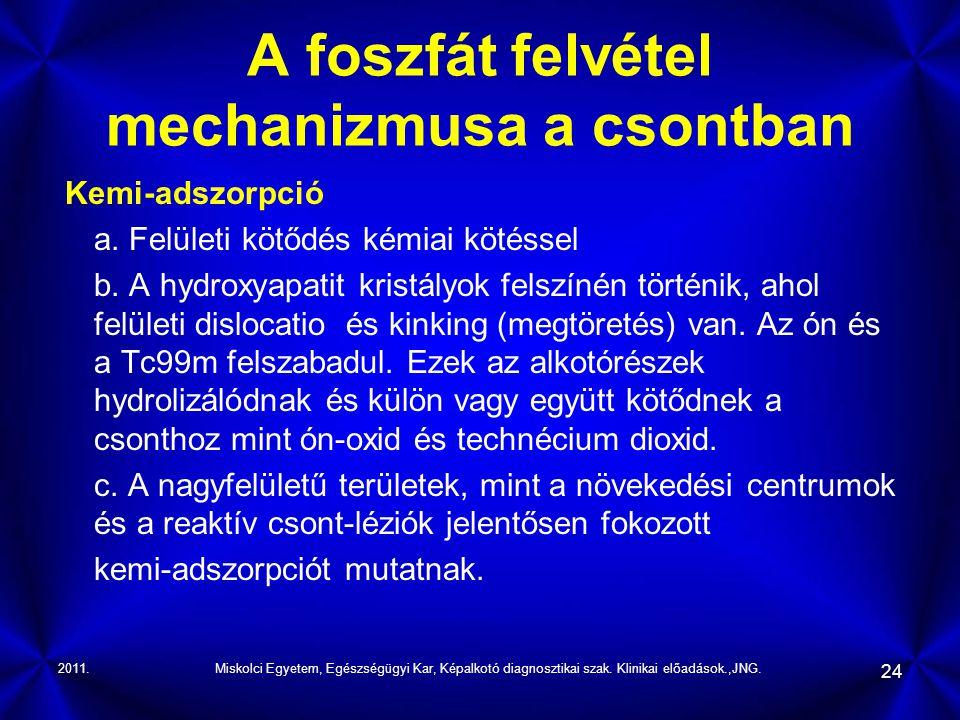 A foszfát felvétel mechanizmusa a csontban