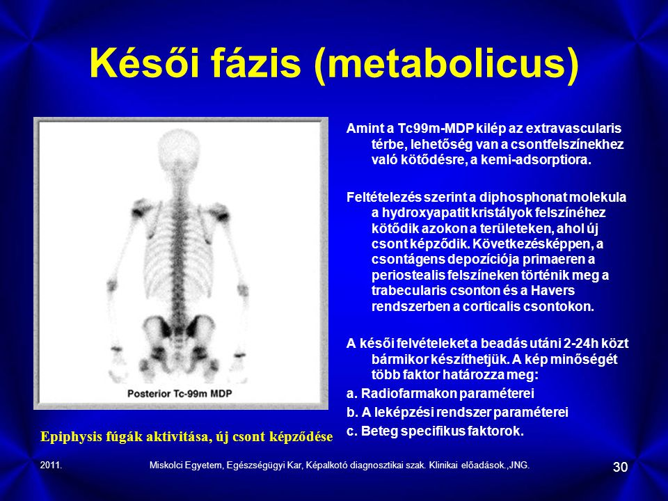 Késői fázis (metabolicus)