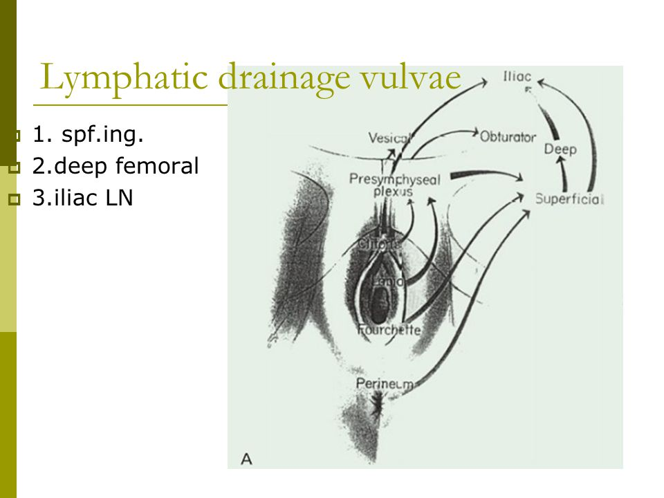 Lymphatic drainage vulvae