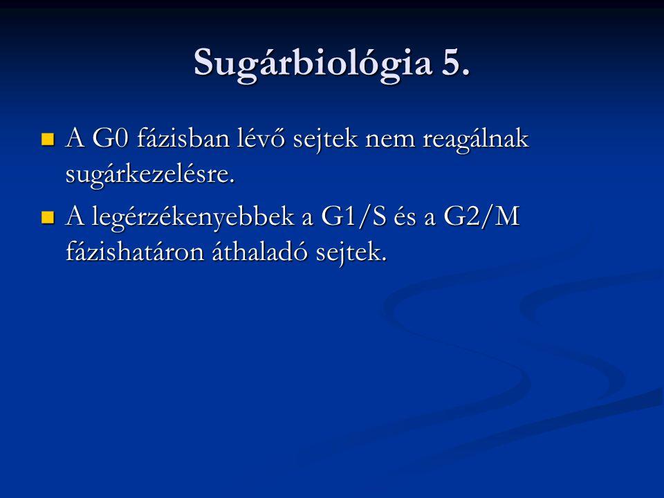 Sugárbiológia 5. A G0 fázisban lévő sejtek nem reagálnak sugárkezelésre.