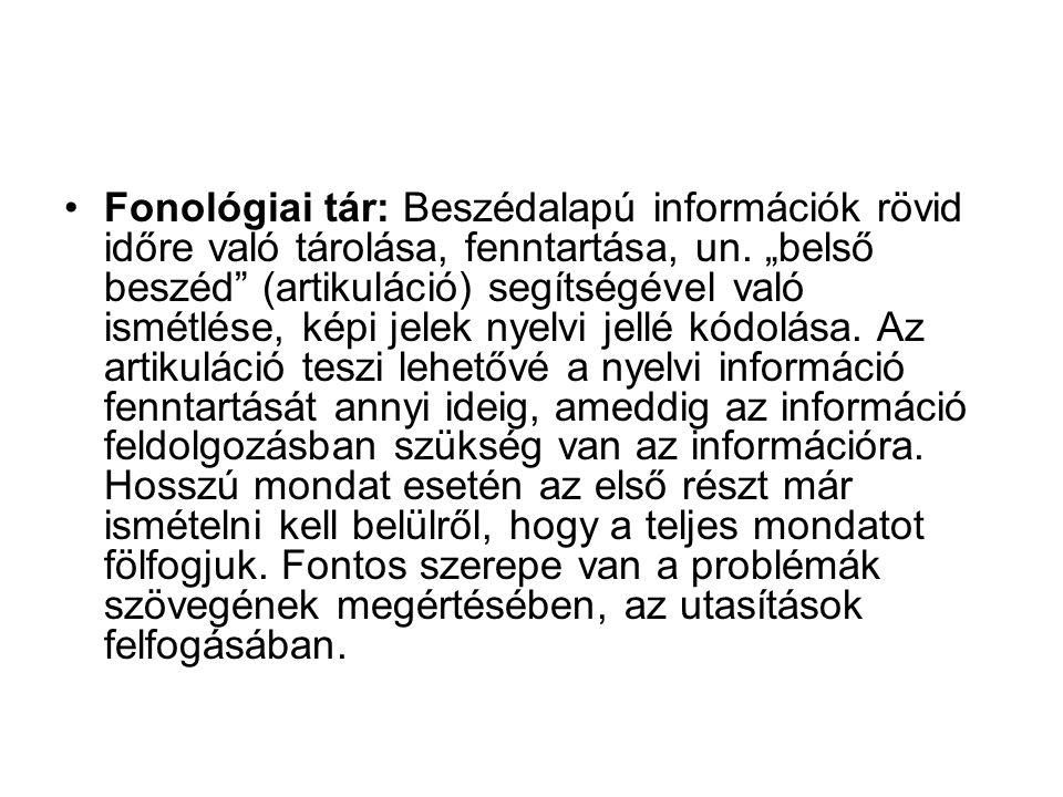 Fonológiai tár: Beszédalapú információk rövid időre való tárolása, fenntartása, un.