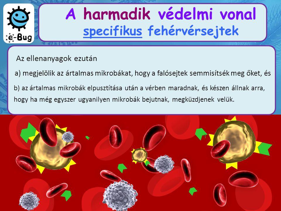 A harmadik védelmi vonal specifikus fehérvérsejtek