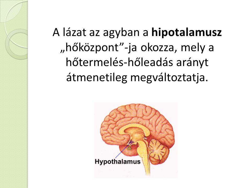 """A lázat az agyban a hipotalamusz """"hőközpont -ja okozza, mely a hőtermelés-hőleadás arányt átmenetileg megváltoztatja."""