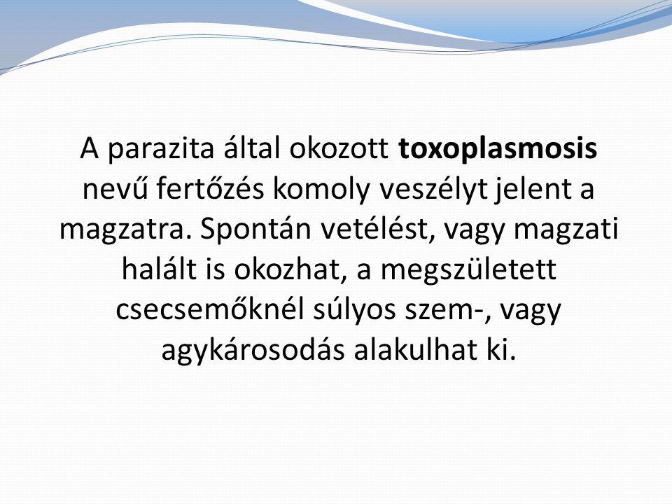 A parazita által okozott toxoplasmosis nevű fertőzés komoly veszélyt jelent a magzatra.