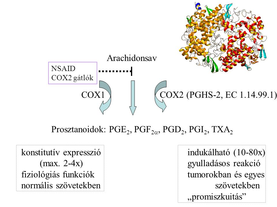 Prosztanoidok: PGE2, PGF2, PGD2, PGI2, TXA2