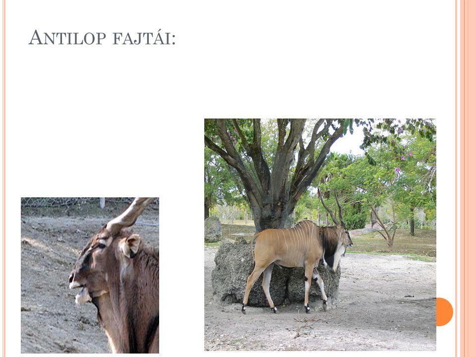 Antilop fajtái: