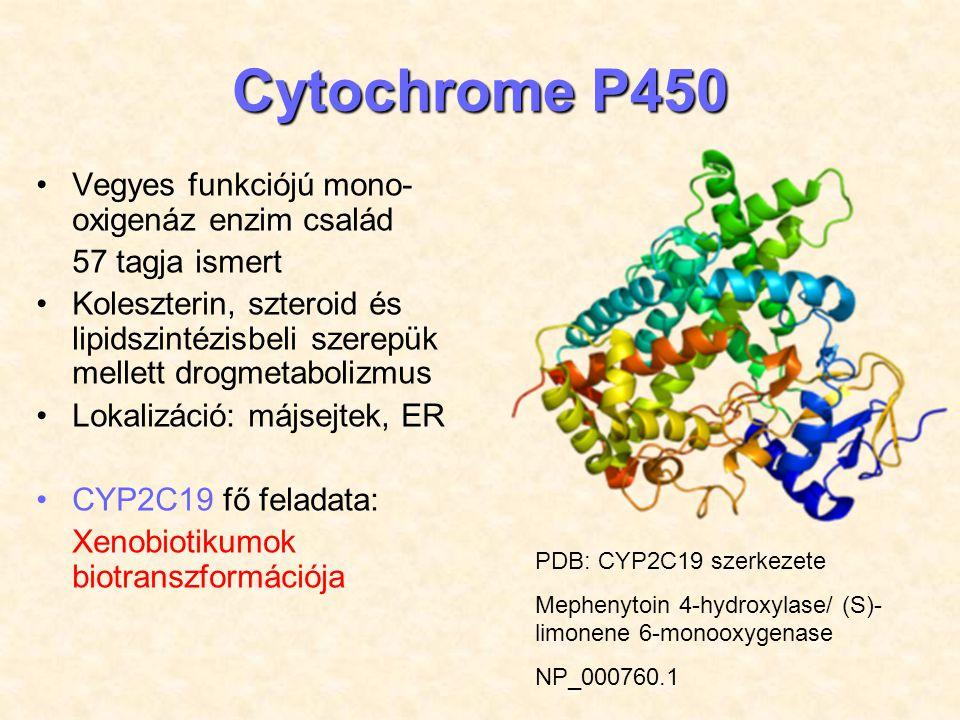 Cytochrome P450 Vegyes funkciójú mono-oxigenáz enzim család