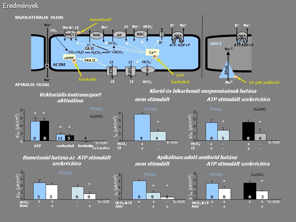 Eredmények Klorid és bikarbonát megvonásának hatása