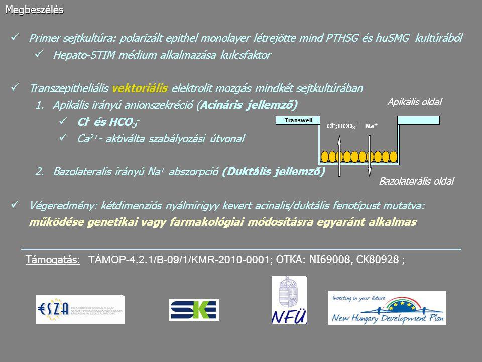 Hepato-STIM médium alkalmazása kulcsfaktor