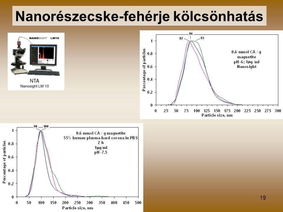Nanorészecske-fehérje kölcsönhatás