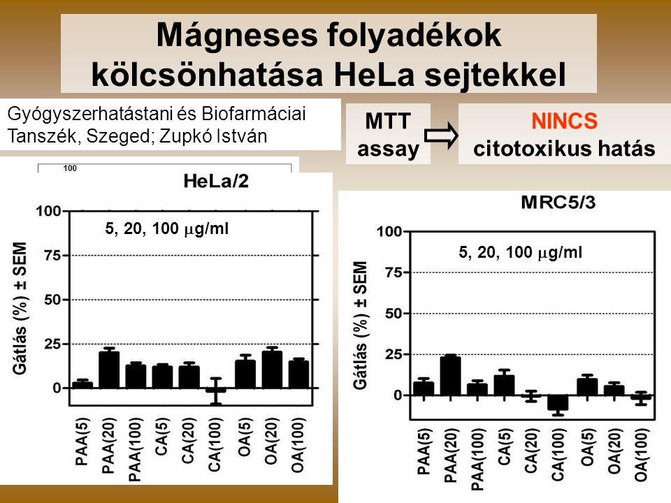 Mágneses folyadékok kölcsönhatása HeLa sejtekkel