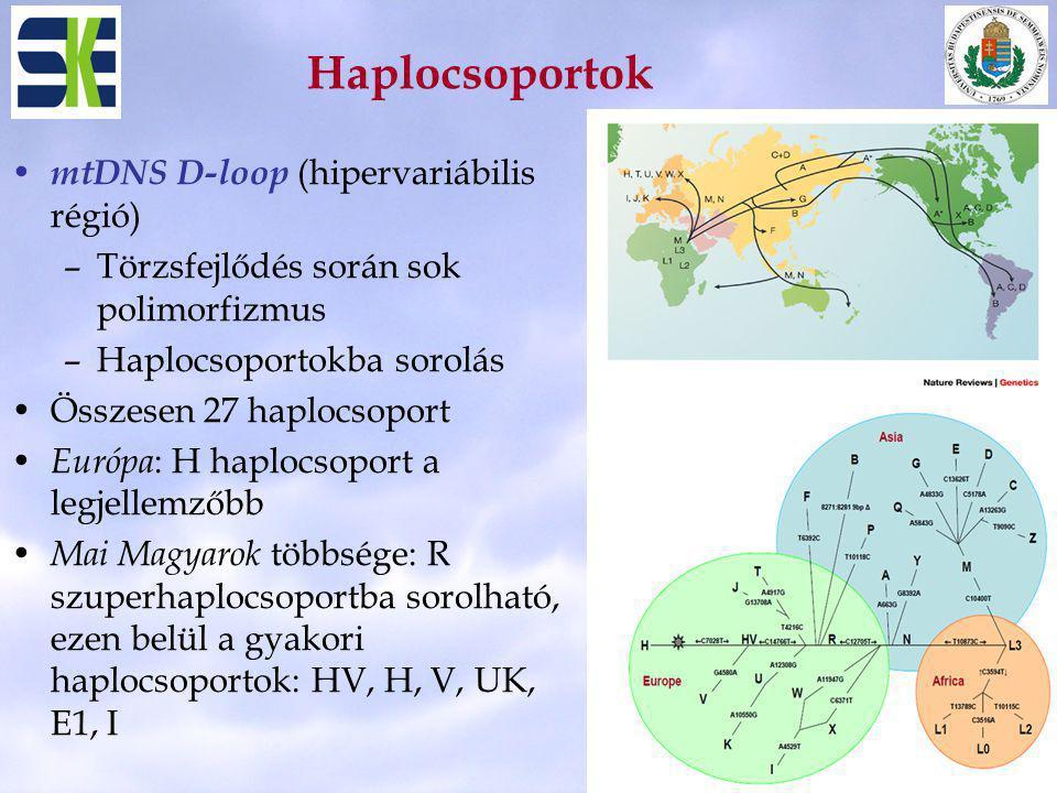 Haplocsoportok mtDNS D-loop (hipervariábilis régió)