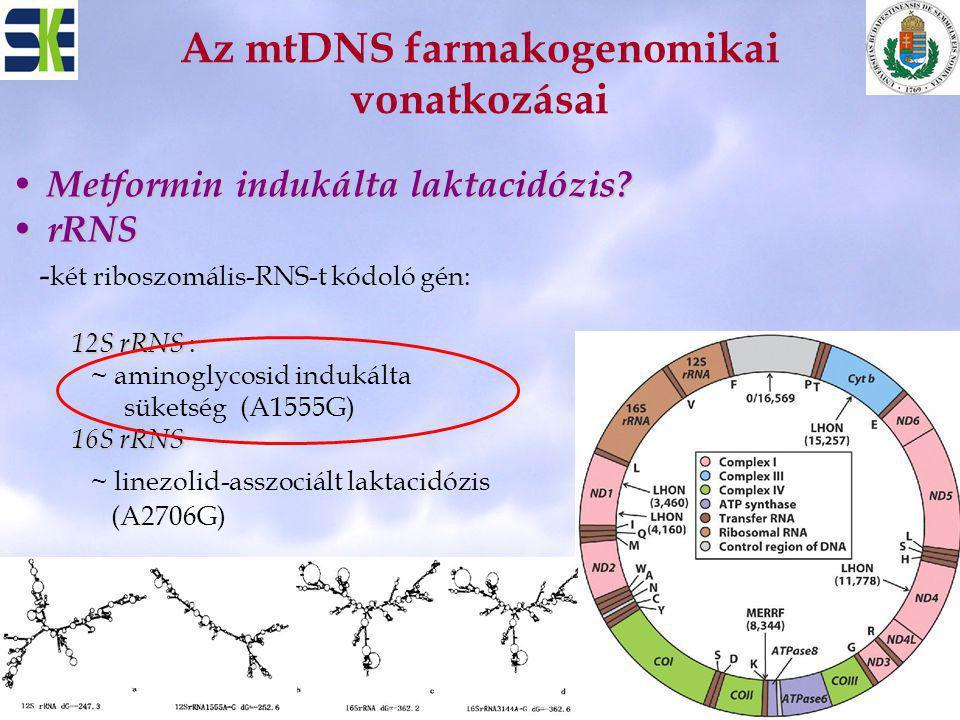 Az mtDNS farmakogenomikai vonatkozásai