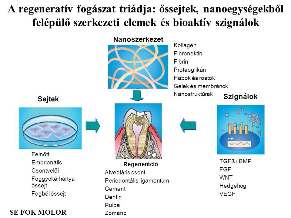 A regeneratív fogászat triádja: őssejtek, nanoegységekből felépülő szerkezeti elemek és bioaktív szignálok
