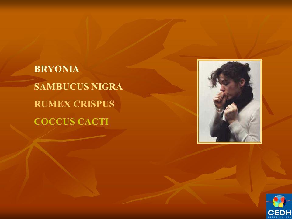 BRYONIA SAMBUCUS NIGRA RUMEX CRISPUS COCCUS CACTI