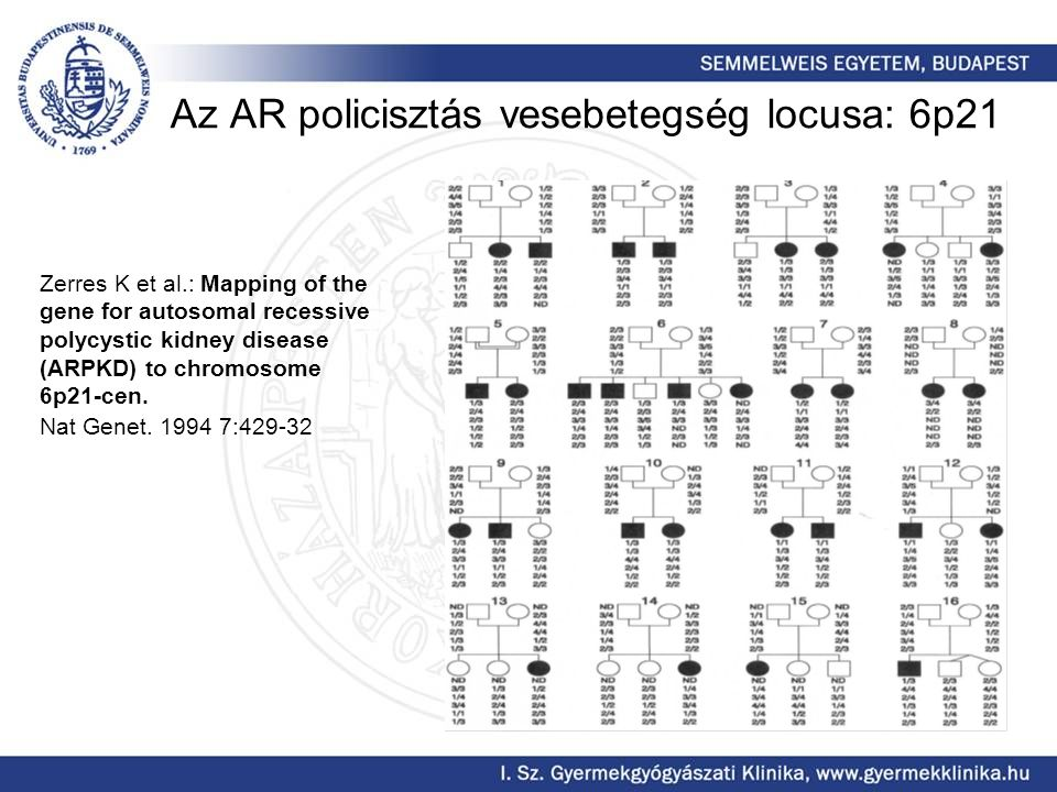Az AR policisztás vesebetegség locusa: 6p21