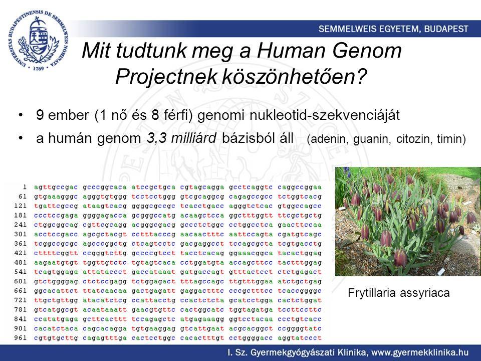 Mit tudtunk meg a Human Genom Projectnek köszönhetően