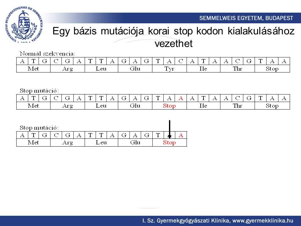 Egy bázis mutációja korai stop kodon kialakulásához vezethet