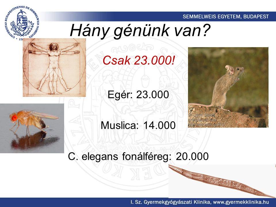 Hány génünk van Csak 23.000! Egér: 23.000 Muslica: 14.000