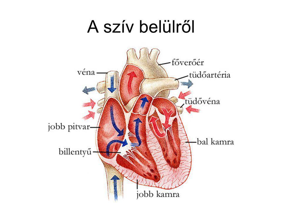 A szív belülről