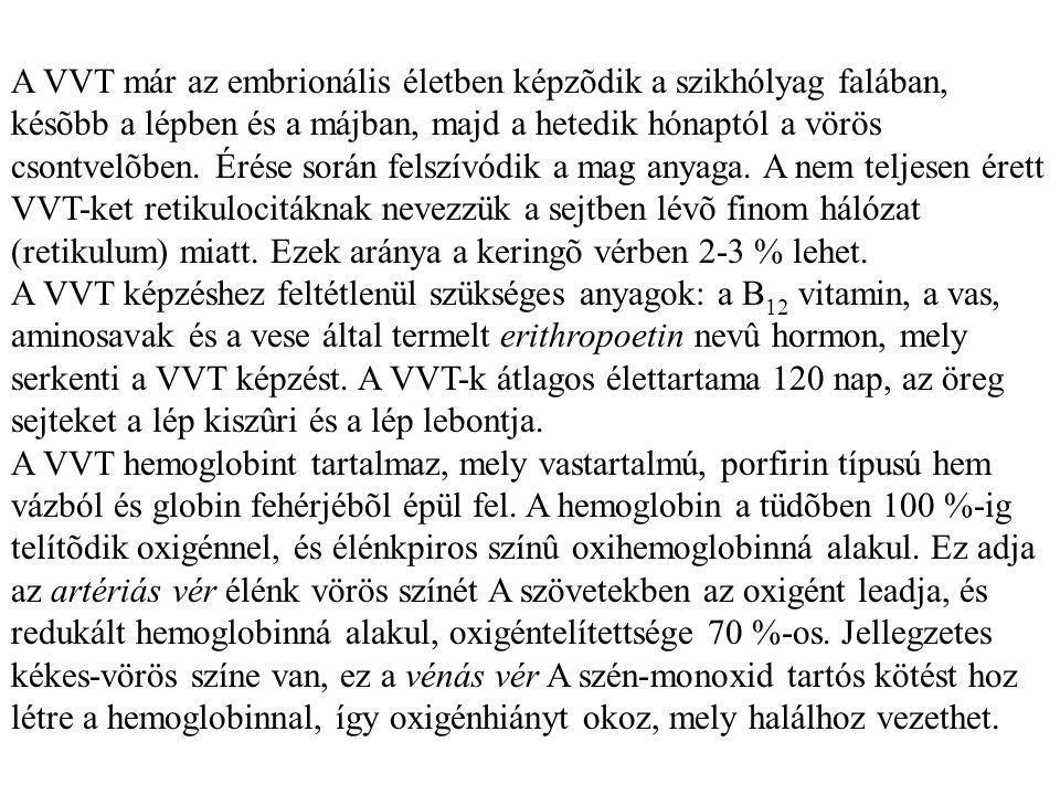 A VVT már az embrionális életben képzõdik a szikhólyag falában, késõbb a lépben és a májban, majd a hetedik hónaptól a vörös csontvelõben.