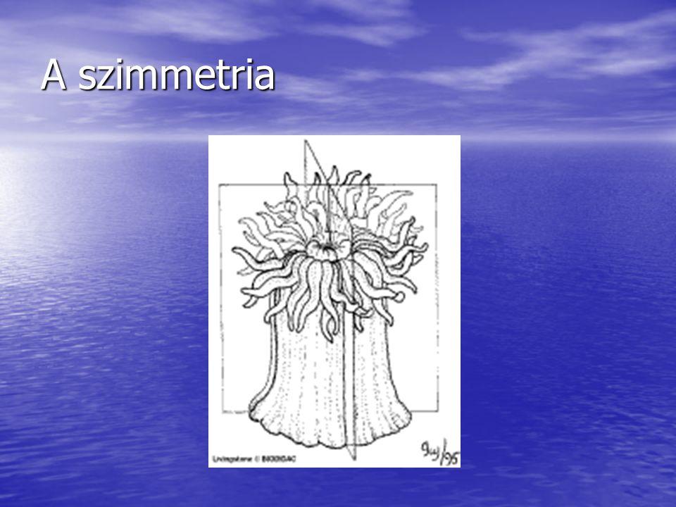 A szimmetria