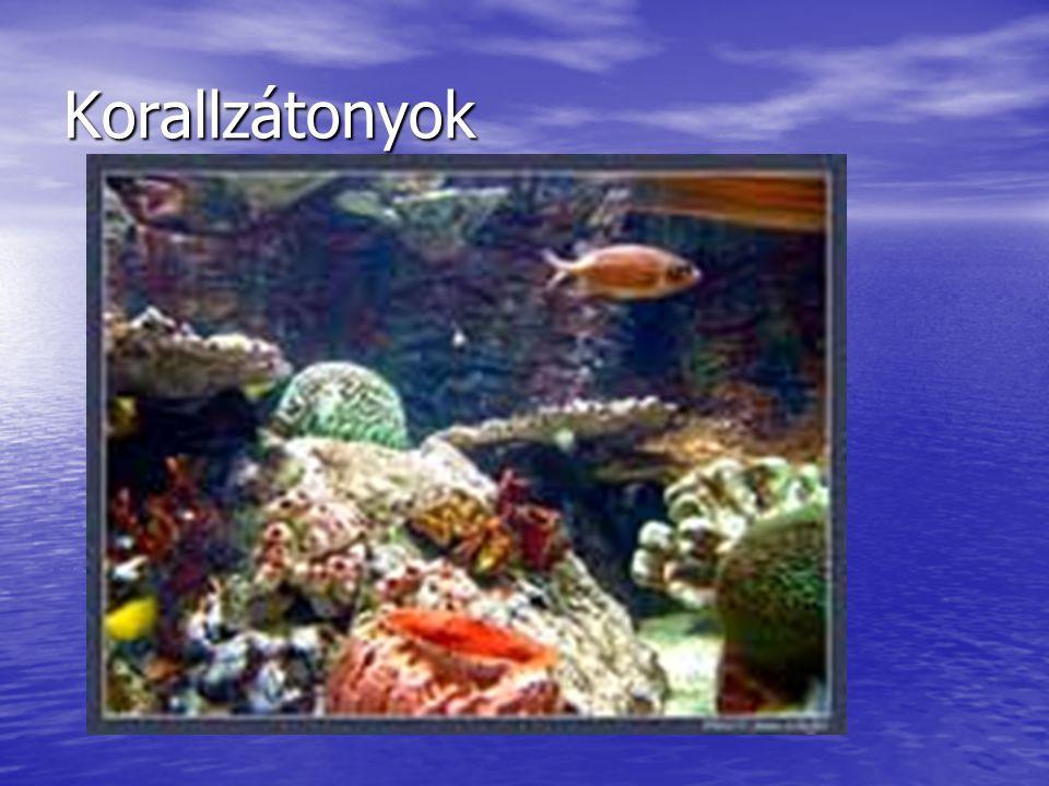 Korallzátonyok