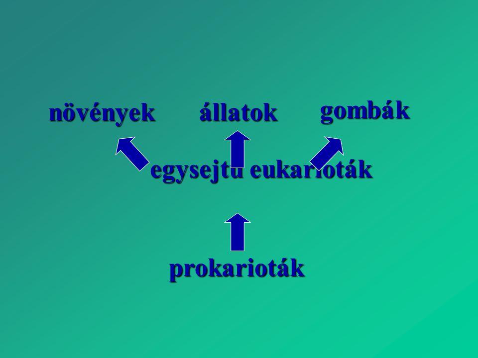 növények állatok gombák egysejtű eukarioták prokarioták