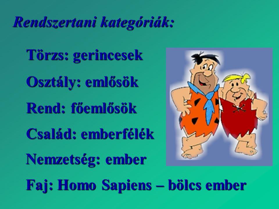 Rendszertani kategóriák: