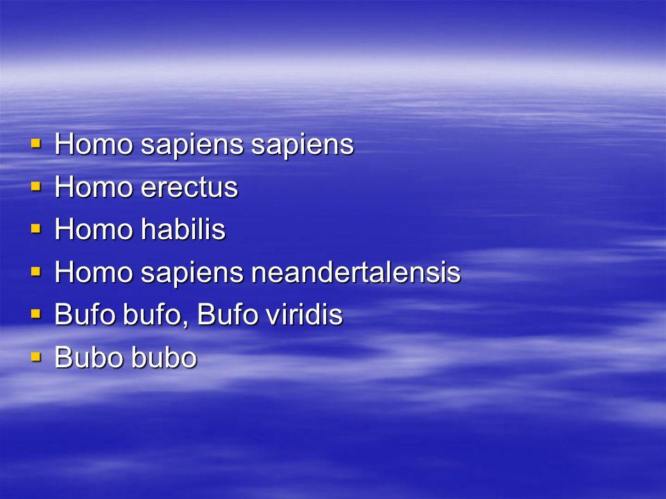 Homo sapiens sapiens Homo erectus. Homo habilis. Homo sapiens neandertalensis. Bufo bufo, Bufo viridis.