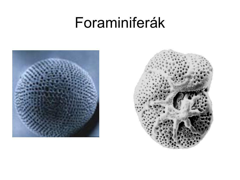 Foraminiferák