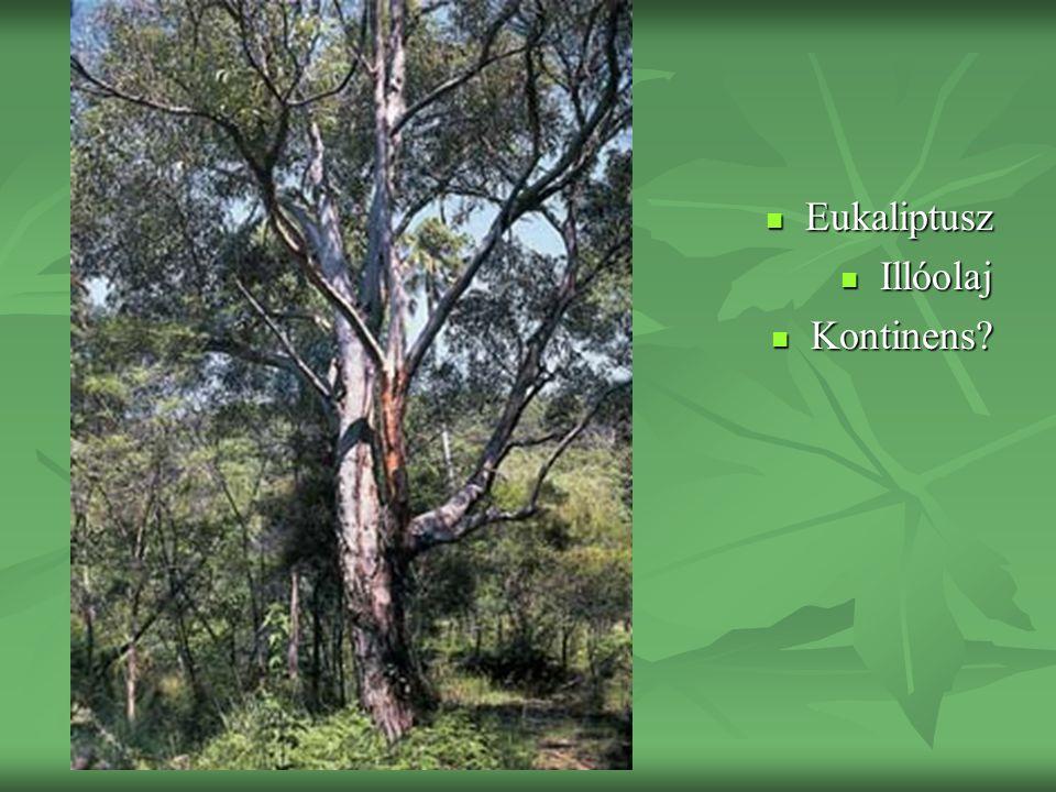 Eukaliptusz Illóolaj Kontinens