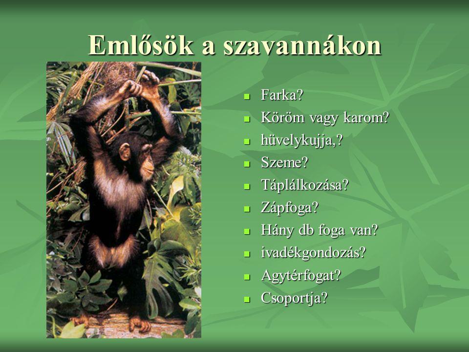 Emlősök a szavannákon Farka Köröm vagy karom hüvelykujja, Szeme
