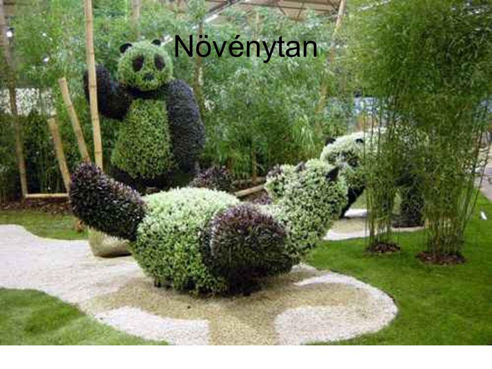 Növénytan