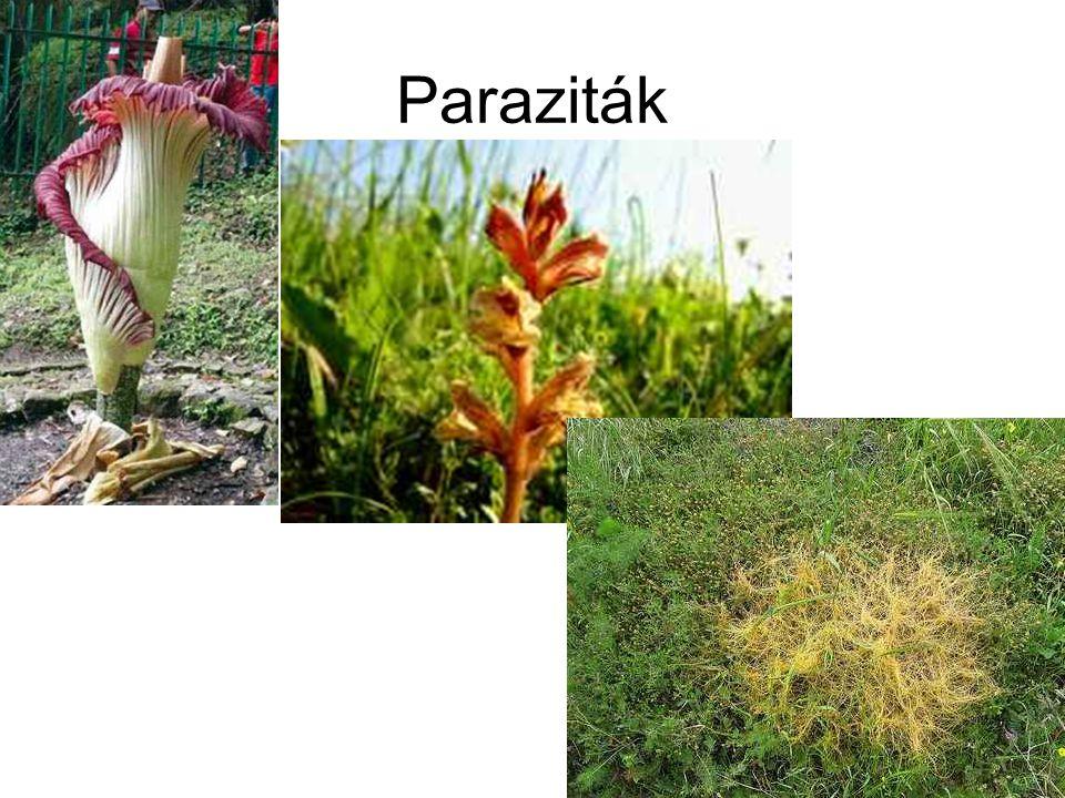 Paraziták