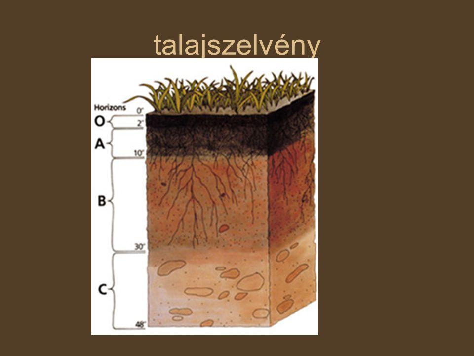 talajszelvény