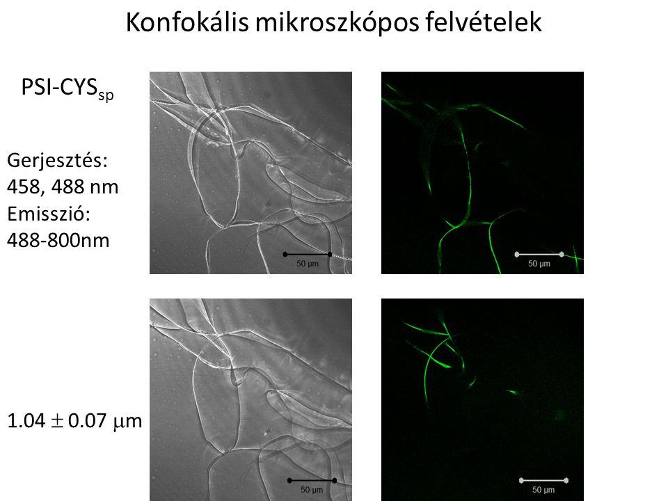 Konfokális mikroszkópos felvételek