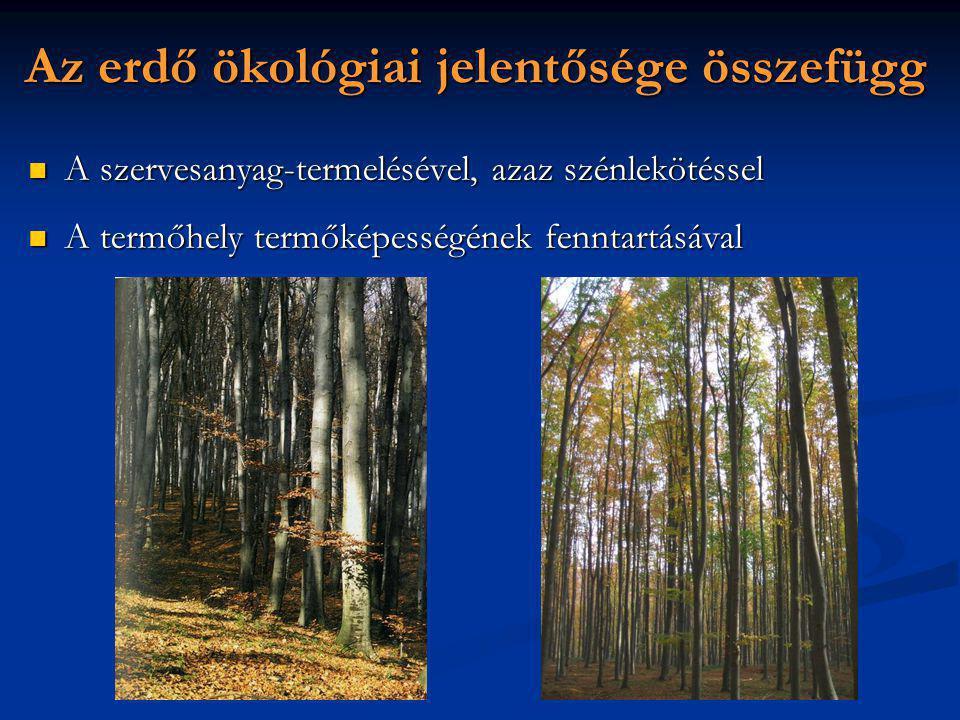 Az erdő ökológiai jelentősége összefügg