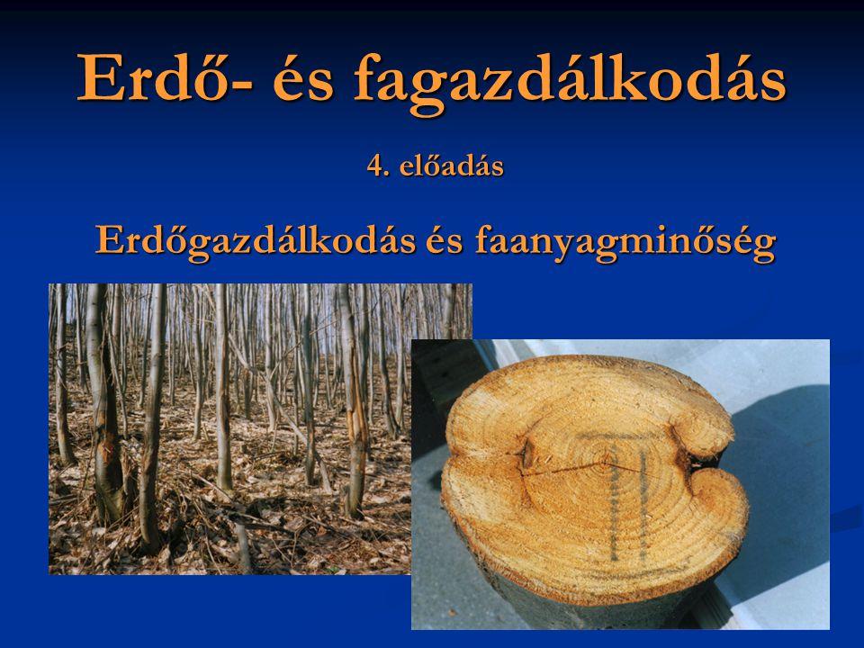 Erdő- és fagazdálkodás