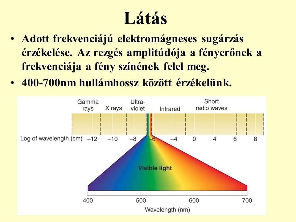 Látás Adott frekvenciájú elektromágneses sugárzás érzékelése. Az rezgés amplitúdója a fényerőnek a frekvenciája a fény színének felel meg.