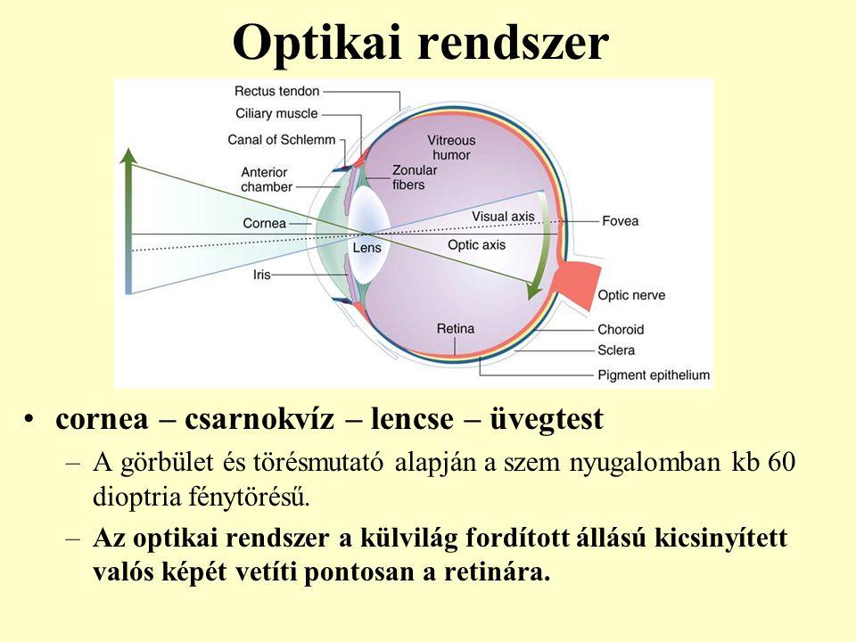 Optikai rendszer cornea – csarnokvíz – lencse – üvegtest