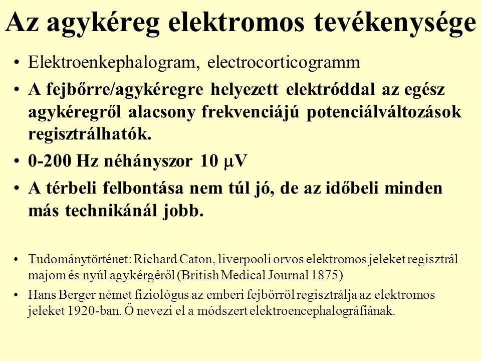 Az agykéreg elektromos tevékenysége
