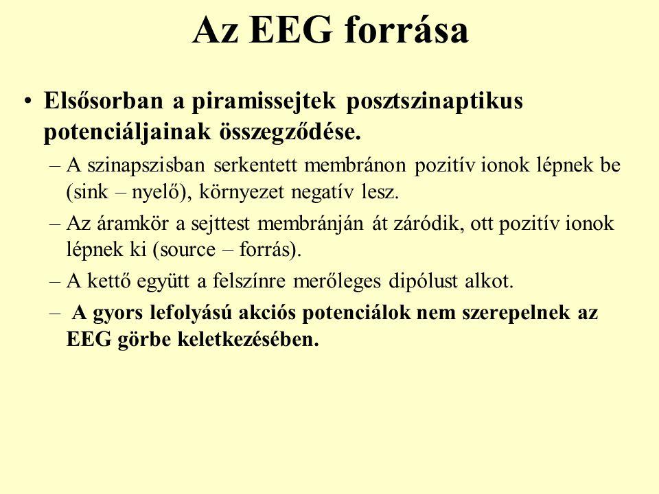 Az EEG forrása Elsősorban a piramissejtek posztszinaptikus potenciáljainak összegződése.