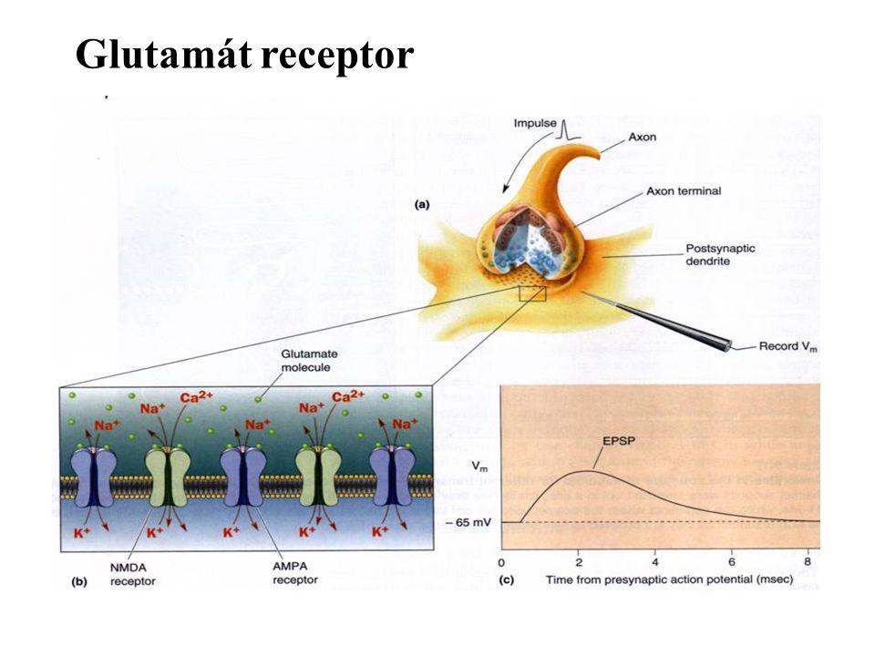 Glutamát receptor
