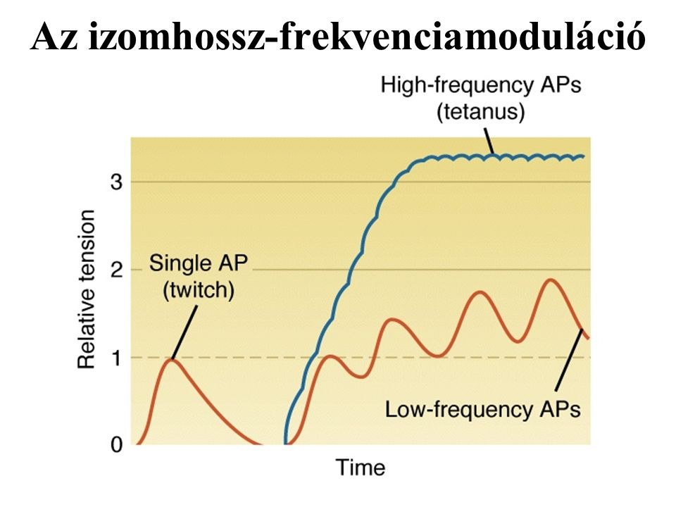Az izomhossz-frekvenciamoduláció