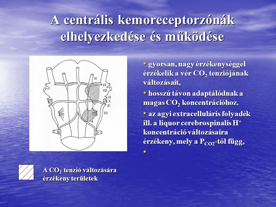 A centrális kemoreceptorzónák elhelyezkedése és működése